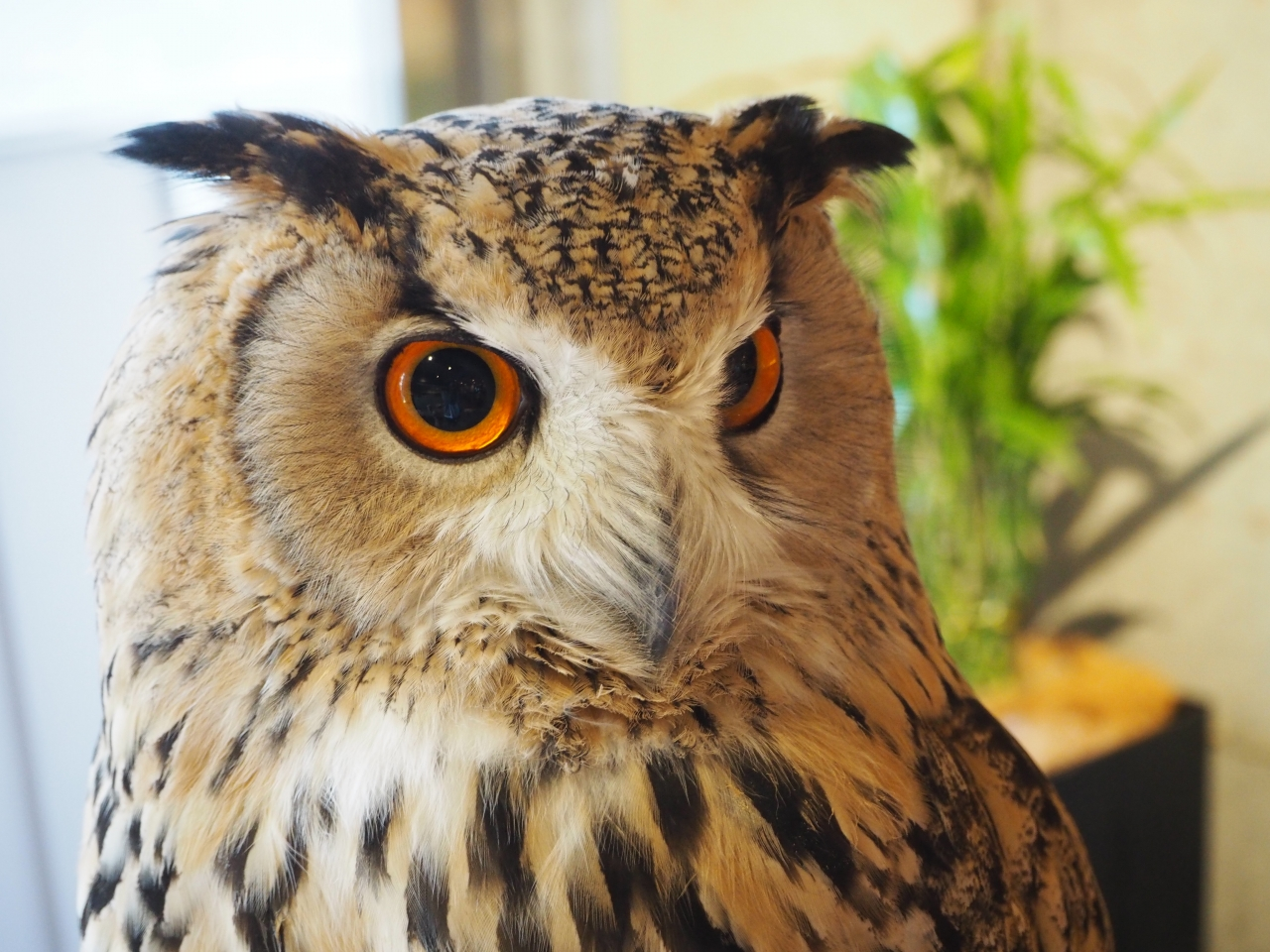things to do in osaka - Chouette Owl Cafe